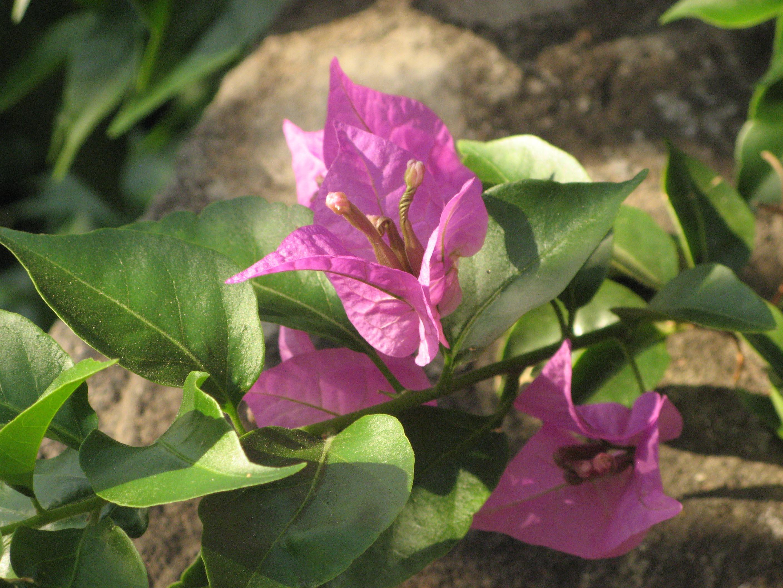 Alicudi-Insel-Blumen 3